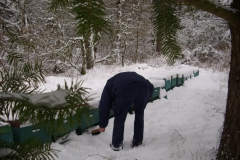 Bienenkontrolle im Winter bei Schnee
