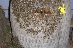 Bienenkorb mit Bienen