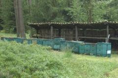 Bienen-auf-dem-Truppenübungsplatz-1-min