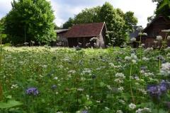 Blühwiese-Sommer-2018