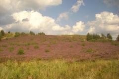 blühende-Heide-min