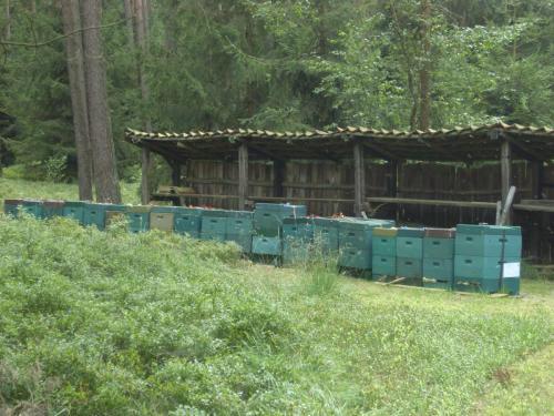 Bienen auf dem Truppenübungsplatz (1)-min