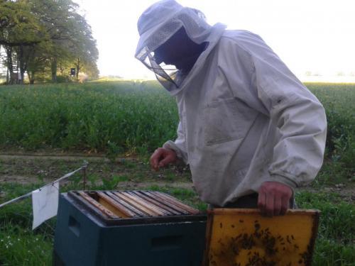 Bienenkontrolle der Raps beginnt gerade zu blühen-min