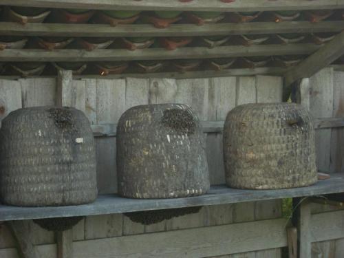 Heidebienen Mitte August in der Tracht-min